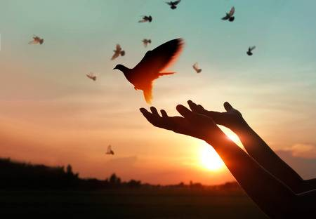 Two hands freeing a dove into the air