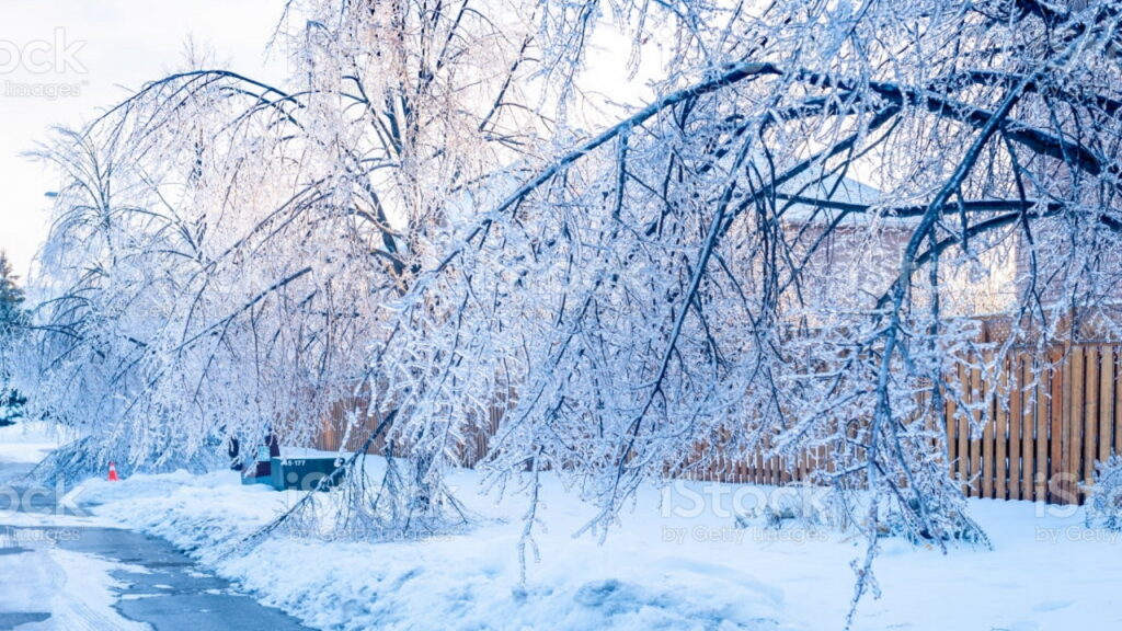 Street with frozen branches in foreground