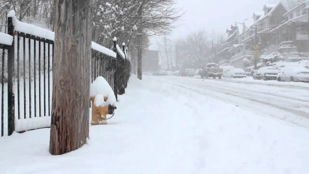 Snowy street with trees, a fence, and a fire hydrant