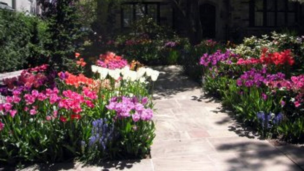Paved path through garden with tulips